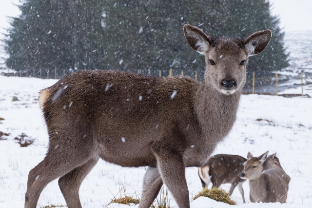 Deer Kingshouse